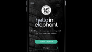 David Sheldrick Wildlife Trust launches its 'Hello in Elephant' campaign