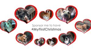 Mdzananda Animal Clinic launches its '#MyFirstChristmas' campaign