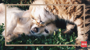 Marketing with pet influencers 101: A Q&A with Justin Kline