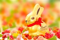 News Article Image for 'Lindt gold bunny comes to aid of endangered rabbit'